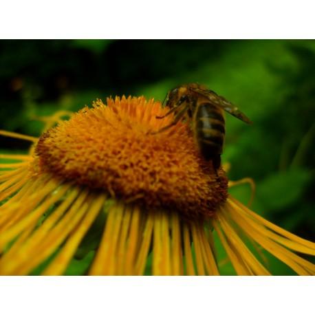 Prodej medu- Petr Svoboda- okres Příbram