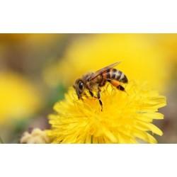 Prodej medu Milan Menc- Vendolí- okres Svitavy