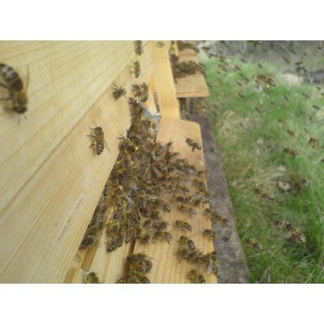 Prodej medu- Mare Pomezný- okres Náchod