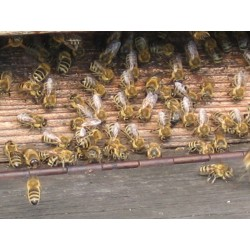 Prodej medu Stanislav Bukovský- Milovice- okres Nymburk