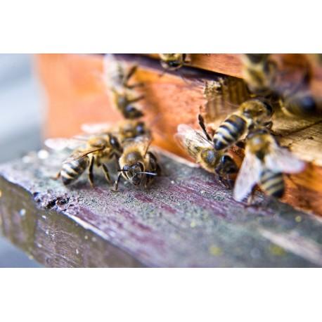 Prodej medu- Pavel Hanuška- okres Praha-západ