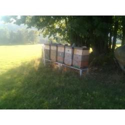 Prodej medu Jan Boštík- Polička- okres Svitavy