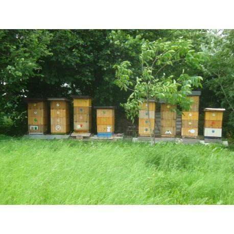 Prodej medu- Vladimír Raška- okres Hradec Králové