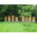 Prodej medu Vladimír Raška- Libřice- okres Hradec Králové
