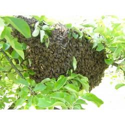 Prodej medu Tomáš Klusoň- Horní Sloupnice- okres Svitavy
