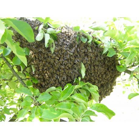 Prodej medu- Tomáš Klusoň- okres Svitavy