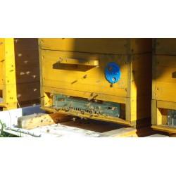 Prodej medu Marek Mocek- Hýskov- okres Beroun