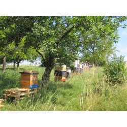 Prodej medu- Oldřich Wagner- okres Vyškov