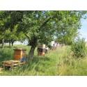 Prodej medu Oldřich Wagner- Vážany- okres Vyškov