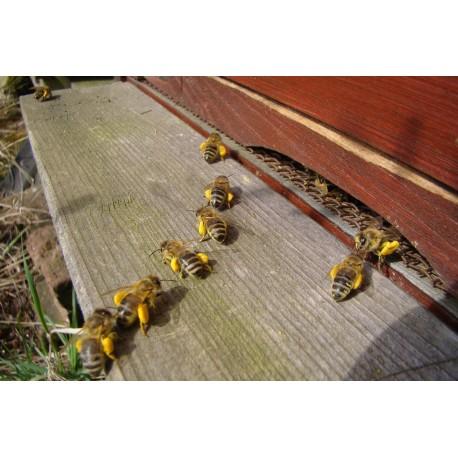 Prodej medu- Jan Valeš- okres Havlíčkův Brod
