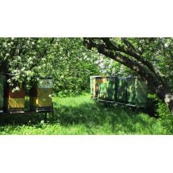 Prodej medu- Rudolf Tvarůžka- Dolní Lhota- okres Ostrava-město
