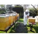 Prodej medu Tomáš Sobotka- Kopřivnice- okres Nový Jičín
