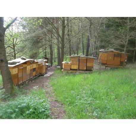 Prodej medu- Klára Kadičová- Velešín- okres Český Krumlov