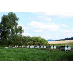 Prodej medu- Jiří Halml- Horažďovice- okres Klatovy