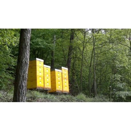 Prodej medu- Petr a Lubomír Buchta- okres Blansko