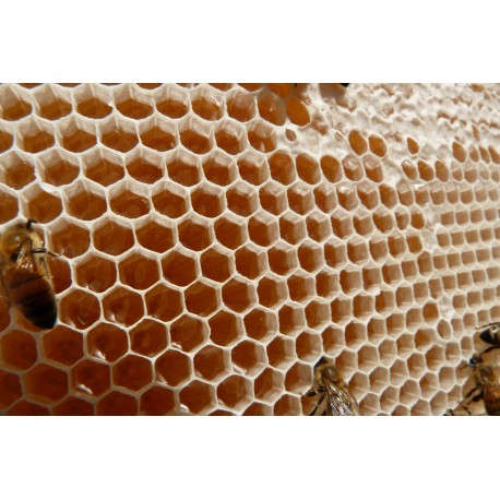 Prodej medu- Jiří Krejčí- Dohalice- okres Hradec Králové