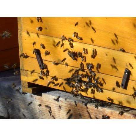 Prodej medu- Ludmila Veselá- Moravská Třebová- okres Svitavy