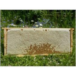 Prodej medu Bohumil Svoboda- Jihlava