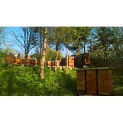 Prodej medu- Luděk Klinkovský- Ostrava-Hrabůvka