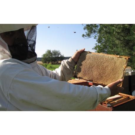 Prodej medu- Jiří Petrásek- Polička- okres Svitavy