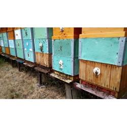 Prodej medu- Jaroslav Majer- Plzeň