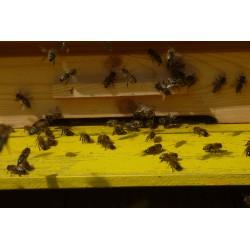 Prodej medu- Pavla a Luboš Macháčkovi- Praha-Dolní Měcholupy