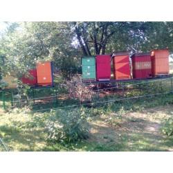 Prodej medu Lenka Pešlová- Svratka- okres Žďár nad Sázavou