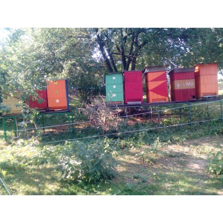 Prodej medu- Lenka Pešlová- Svratka- okres Žďár nad Sázavou